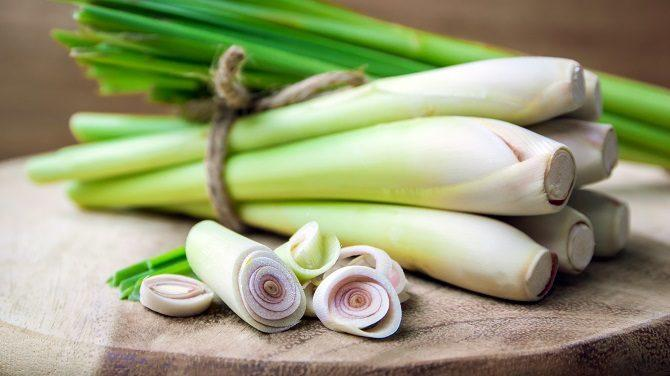 How to Buy Use and Store Lemongrass